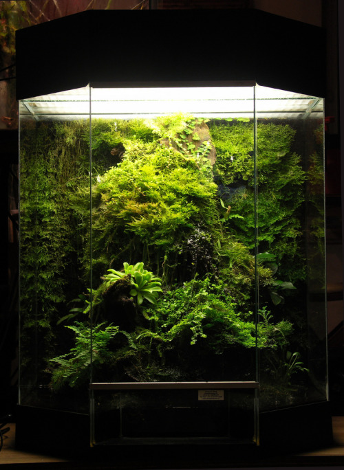 badminton:  electricorchid:fantastic vivarium planted with moss and carnivorous plants | +