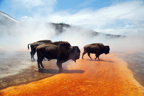 yellowstone national park (wyoming) via palojono
