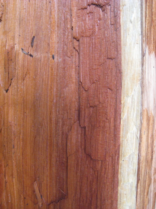 Extreme redwood close-up (I'd like to take credit for this photo, but I can't).