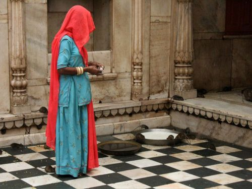 nationalgeographicdaily:  Karni Mata Temple, IndiaPhoto: Rachael Williams A woman in Deshnoke, Rajasthan, watches as rats drink milk from a pan at the Karni Mata Temple, a monument to the rat goddess. More than 20,000 rats live in the temple, including a handful of white ones, which are thought to be direct descendents of Karni Mata and therefore considered especially sacred.