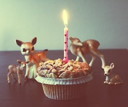 thedeer:  The Deer is one year old today!