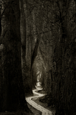 "aliasinkhorn:  ""A path is only a path, and there is no affront, to oneself or to  others, in dropping it if that is what your heart tells you. Look at  every path closely and deliberately. Try it as many times as you think  necessary. Then ask yourself alone, one question. Does this path have a  heart? If it does, the path is good; if it doesn't it is of no use.""—  Carlos Castaneda Another repost and a great favorite of mine.  Sometimes I like to stray…"