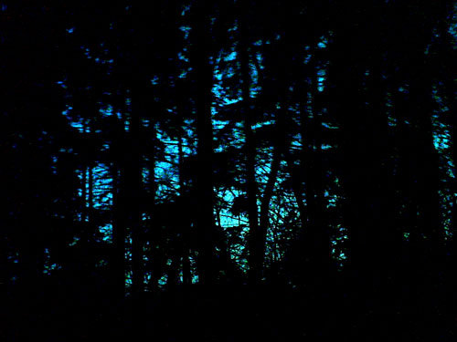 i love the woods… and i love the time of night when it's after sunset but the sky is still blue… so beautiful <3