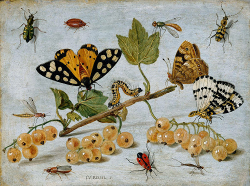 Jan van Kessel Insects and Fruit 1636-79