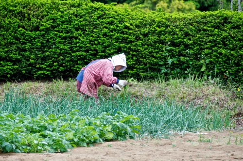 Tending to her farm. Hadano, Kanagawa Prefecture.