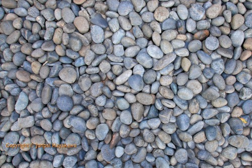 Stones. From fine bleach white, almost sandlike gravel to large round river stones, the single most important element of Japanese gardens is probably the various grades of gravel and stones that are used in both the pathways and the gardens themselves.