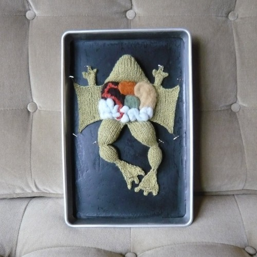 Knitted frog dissection by Emily Stoneking… love it!