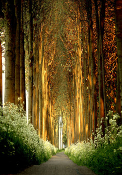 enchanted-ivy:  achangingaltar:   La Cathédrale Naturelle © Lars Van De Goor   (via unknownskywalker)