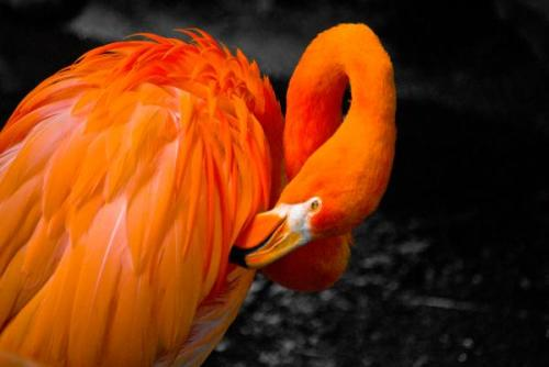 its a flamingo.. an orange flamingo