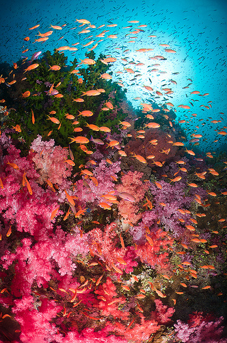 sixohthree:  Fijian Bliss - Vatu-i-Ra Channel, Fiji (by Jim Patterson Photography)