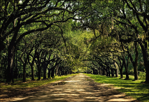 Wormsloe Plantation, Savannah, Georgia by Jody Miller