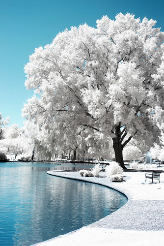 Photography: Snowy tree by the lake