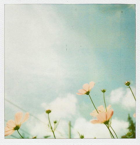 ohhelloyouprettythings:  A Little Polaroid Sx-Love ♥ (by Kristybee)
