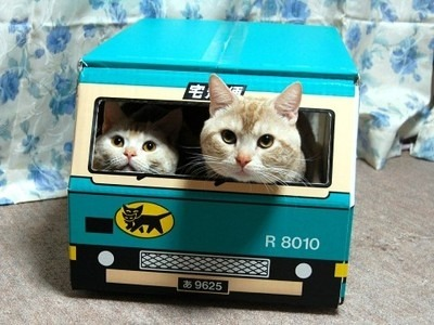 Kitties in a bus! via whi.s3.leg.entries.lg1x8.simplecdn.net