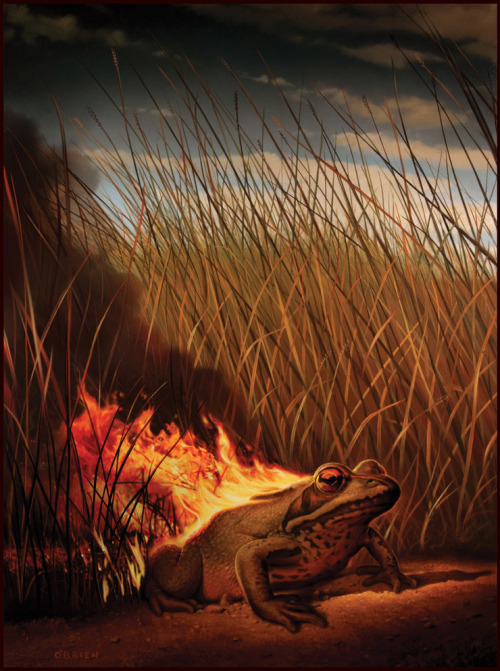 Fire Frog — Master Illustrator Tim O'Brien