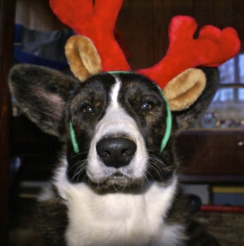 bob, the unhappy reindeer submitted by jhuitz