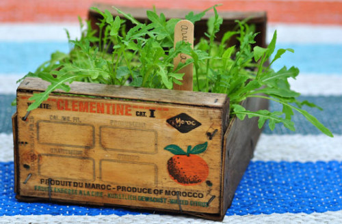 How To Grow a Crate o' Arugula Guest Post from Gayla Trail of You Grow Girl | Apartment Therapy Re-Nest