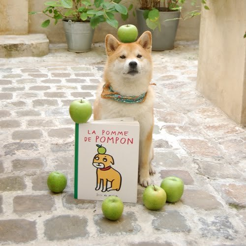 yaruo:  yukko:  whiskersonkittens:   fuckyeahshibainu:   (via happybirthdaywishes) this is amazingly awesome!  (via yaruo)
