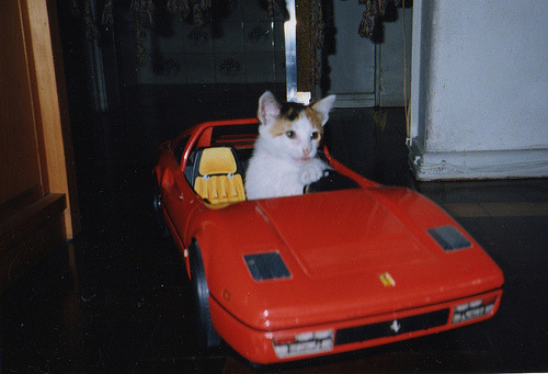 (via tankspeed & hotg0ssip & seagoat) The kitty knows its ride!