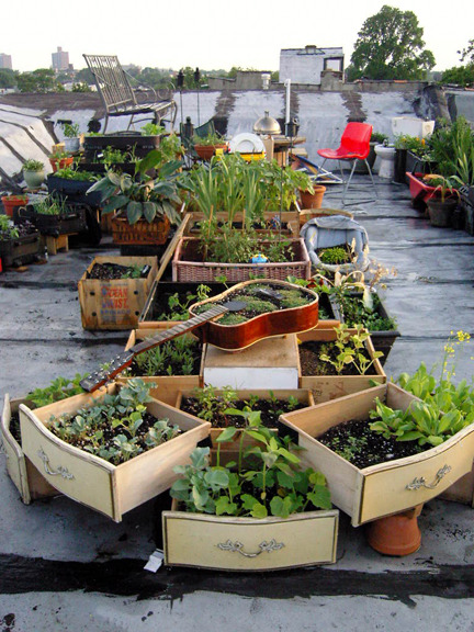 Urban Garden Casual »  Rooftop Farms in Brooklyn, New York