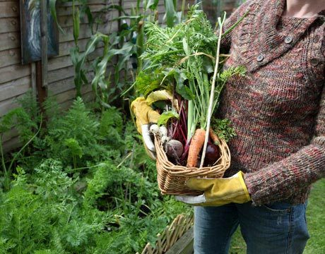 What Is Your Best Piece of Gardening Advice?
