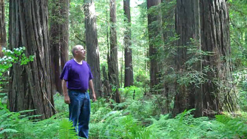 Video: Lost in the Redwoods Whichever way I go, there's no way out!