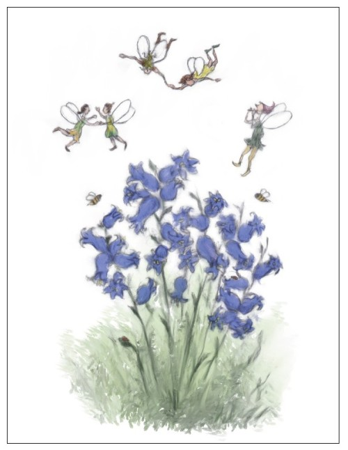 Fairies amidst the bluebells for the upcoming picture book Thimble the Fairy's Acorns & Tea, illustrated by yours humbly!