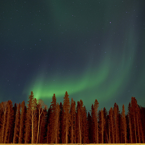 (via photons, photographist)   Northern Lights  Fort McMurray, ABMarch 6, 2010