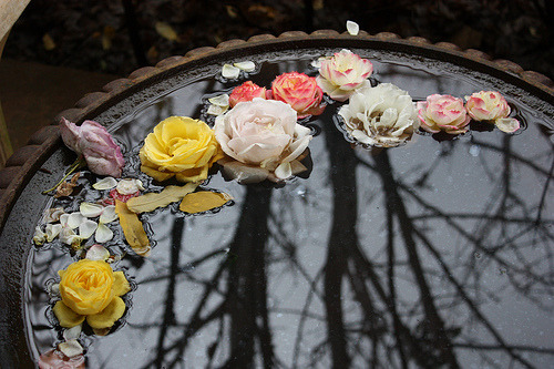 (via beauty-lies-within-us, misswallflower)