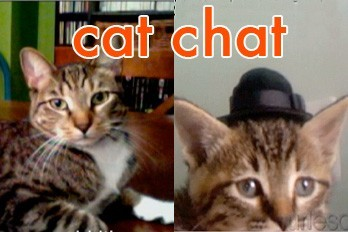Kitten Wearing A Tiny Hat Sets the Record Straight (Cat Chat Video) http://ow.ly/28PlX
