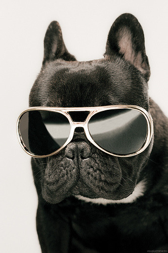 Dog wearing sunglasses. bunnyfood:  (via rapdogs:theanimalblog)