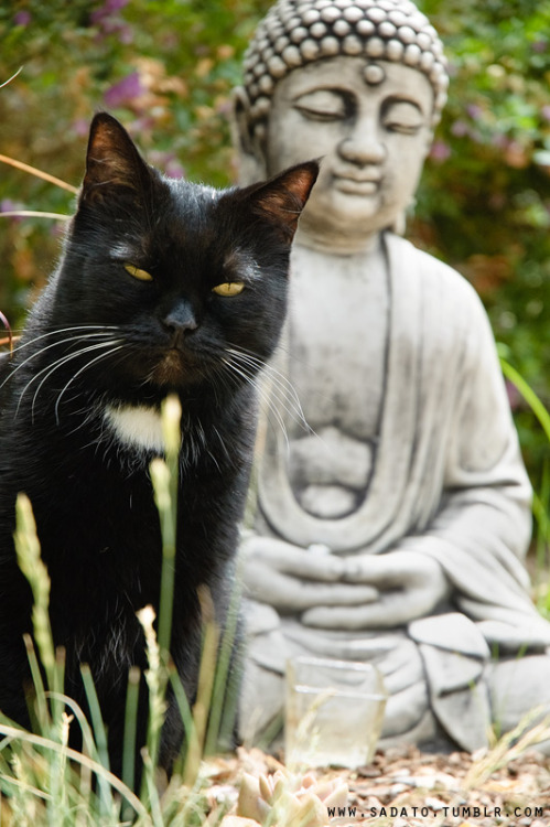 sadato:  In the realm of the cat gods.