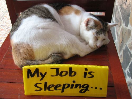 caturday:  My job