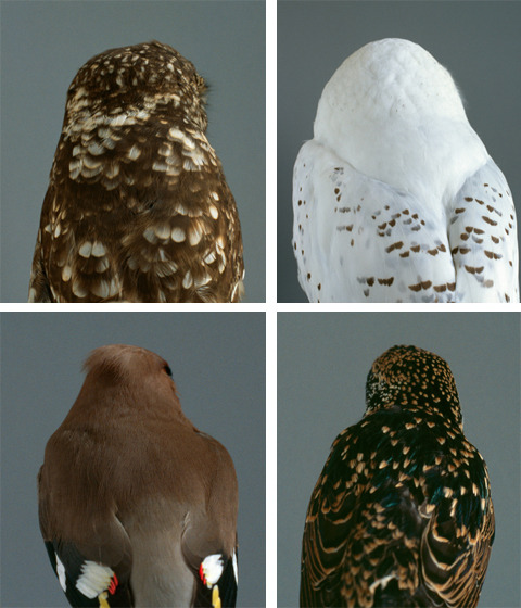 fullbloom:  Audrey Corregan  every species of bird is perfect why are birds so perfect birds are the most perfect beings why do i do things that are not looking at birds when i could be looking at birds