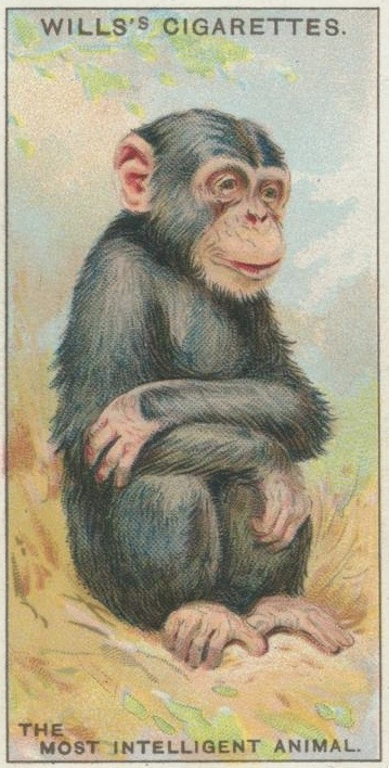 The Most Intelligent Animal  via NYPL