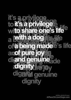 quote and design by aplacetolovedogs.com it's a privilege to share one's life with a dog  a being made of pure joy and genuine dignity