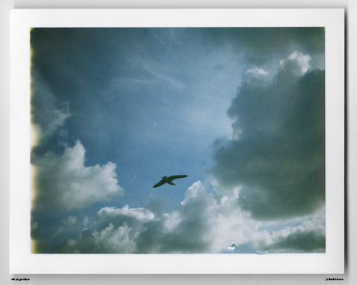 Day 168.  Seagull and sky. Bude, Cornwall, UK.   Polaroid Land Camera 240 and 125i film (expired 12/2007).   Polaroid photograph, all rights reserved, copyright: Jo Bradford 2010