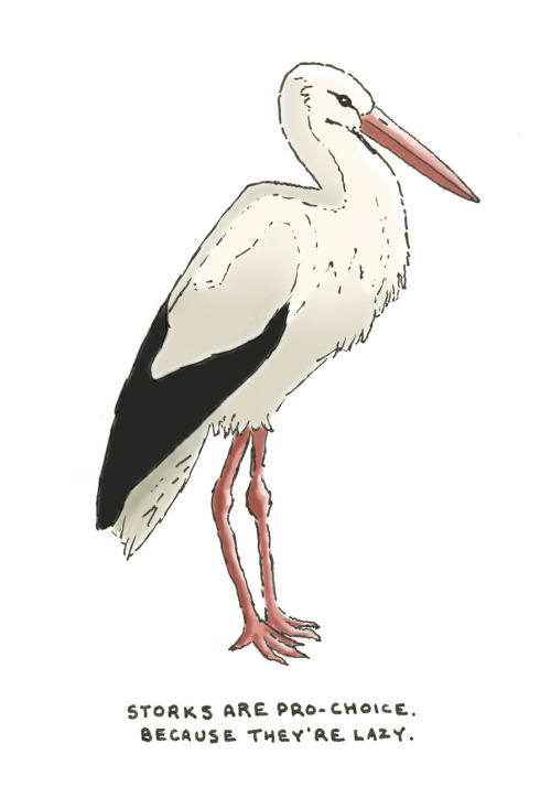 storks are pro-choice. because they're lazy.