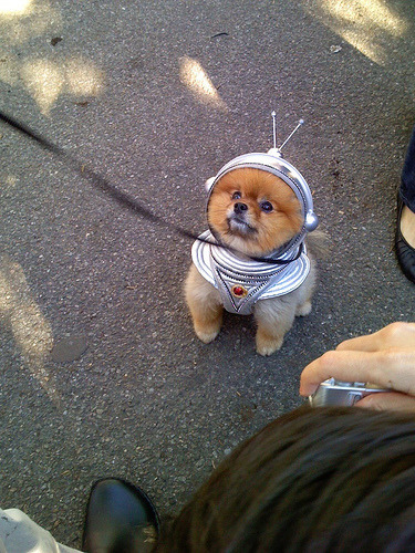 what a cute little space dog  via the animal blog