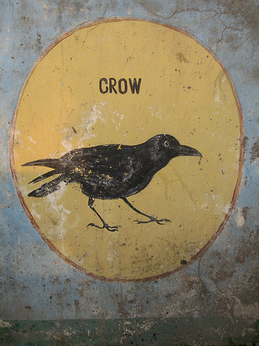 eyeburfi:  Crow (Chail, India) (by husar)