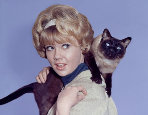 OMG used to love this movie!!!! classicfilmheroines:  Hayley Mills in That Darn Cat! (1965) Image Source: Tout Le Cine