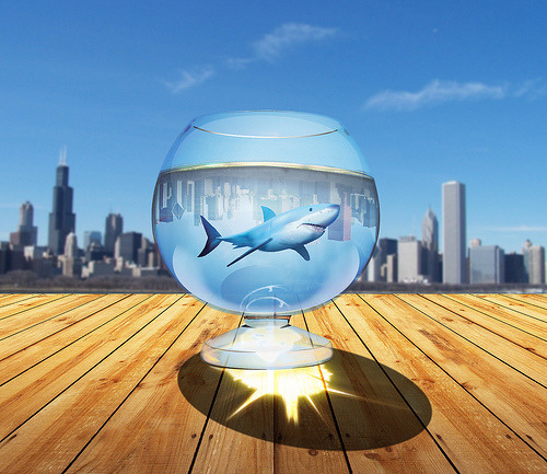 shark in the glass (by kovacevic2009)