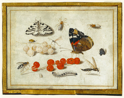 Jan van Kessel Butterflies, Insects and Currants 1650