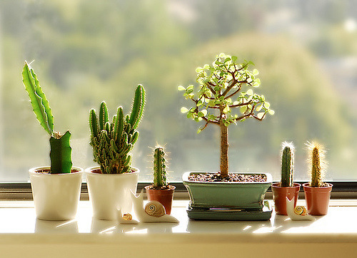 Cactus garden, how perfect. My little garden (by {JooJoo})