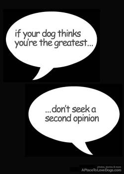 if your dog thinks you're the greatest…don't seek a second opinion scrapbook