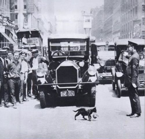 Vintage photo - Cat priority