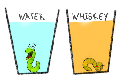 "peetypassion:  Whiskey Worms A chemistry teacher one day decided to teach his class about the dangers of alcohol. He thought up a neat little experiment, and showed it to his class.He  had two glass tumblers, one filled with clean water, and the other with  whiskey. He placed a live worm in each glass. The worm in water was  perfectly fine, however the worm which was dropped in whiskey died  almost instantly.Rather pleased with the experiment, he decided  to ask the class what they could deduce from it. The class were silent  for several seconds, until one boy at the back called out: ""Drink  whiskey and you won't get worms!"""