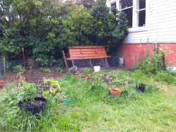 Nice backyard veggie garden and chicken coop via a nice walk through the neighborhood