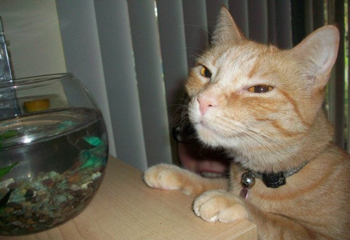 Troll Cat will take care of the fish while you're gone.