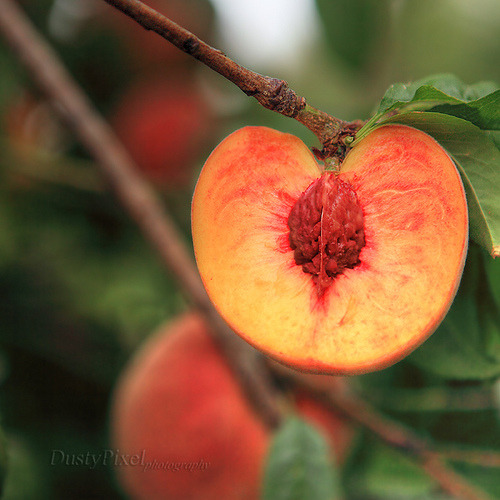 Sliced Peaches (by Dusty Pixel)